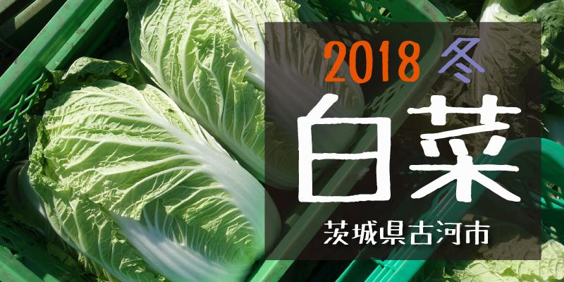 産地のふるさと便り 2018白菜