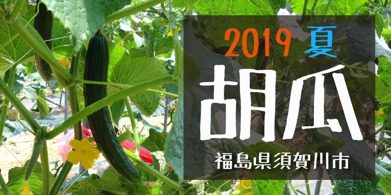 産地のふるさと便り 2019胡瓜